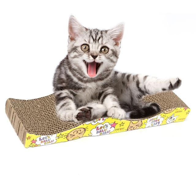 Принадлежности для котов купить