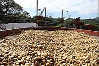 Кофе в зернах Сальвадор, Ферма: Santa Rita, свежая обжарка