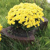 Золотой мандарин Цветочница круглая(450х660х250) Коричневый цвет на сером цементе Вес 63,3 кг