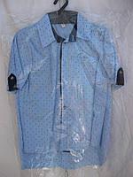 """Рубашка на мальчика (116-134 см) (коттон) якоря """"Odessa Mama"""" M-629"""