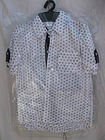 """Рубашка на мальчика (116-134 см) (коттон) горошек """"Odessa Mama"""" M-629"""