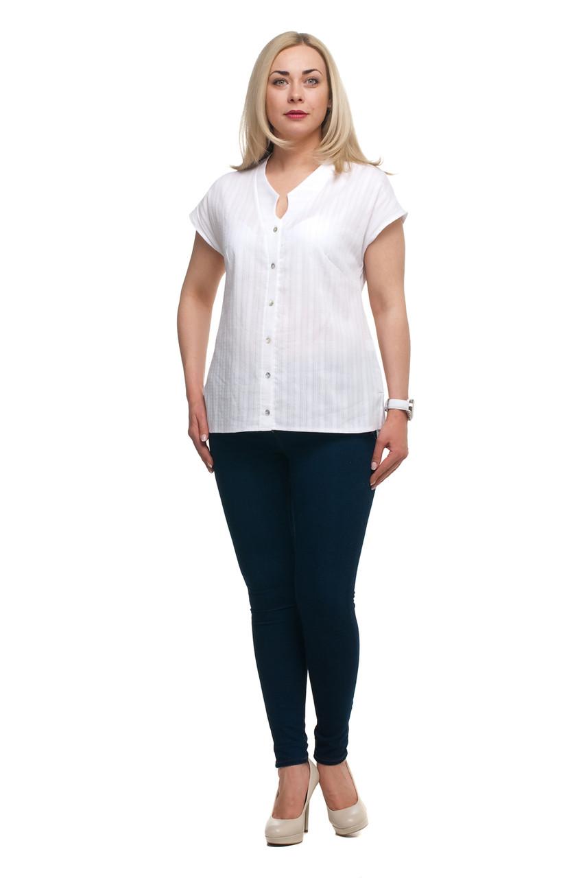 Женская блузка хлопковая большого размера 1710024