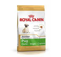 ROYAL CANIN PUG JUNIOR (МОПС ДЖУНИОР) корм для щенков до 10 месяцев 1,5КГ