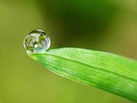Компания начинает выпуск биоорганической продукции