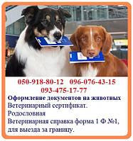 Оформление документов на животных - быстрое оформление. Ветеринарная справка форма 1 Ф №1, для выезда за грани