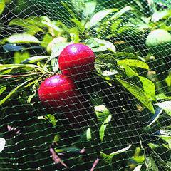 Сетки Bradas (для защиты ягод от птиц)