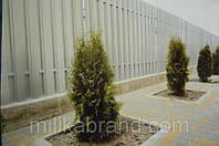 Забор штакетный стандарт двухсторонний 2м*1м,купить от производителя