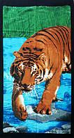 Полотенце для пляжа махровое Тигр
