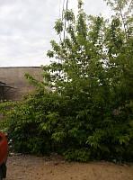 Земельный участок село Бурлачья Балка, фото 1