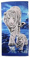 Пляжное полотенце Тигр белый (велюр-махра) 70х140. Код 1615-1574