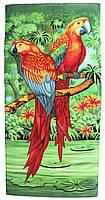Пляжное полотенце Попугай (велюр-махра) 70х140. Код 1615-1912