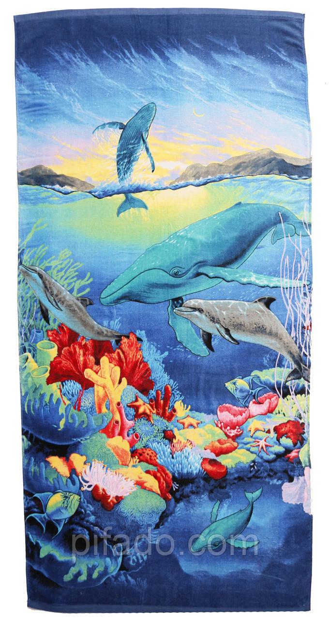 Пляжное полотенце Дельфин (велюр-махра) 70х140.
