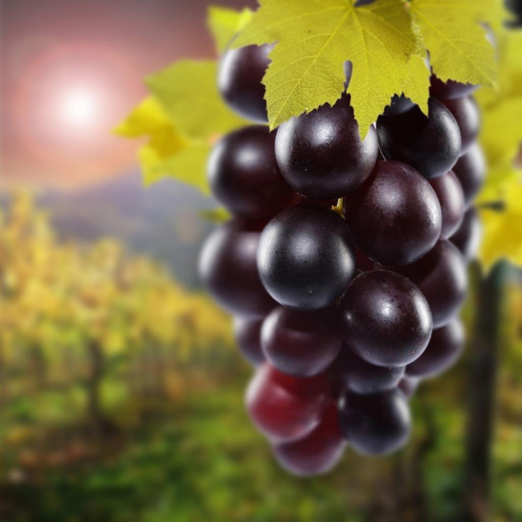 Ароматизатор «Изабелла » Виноград Baker Flavors