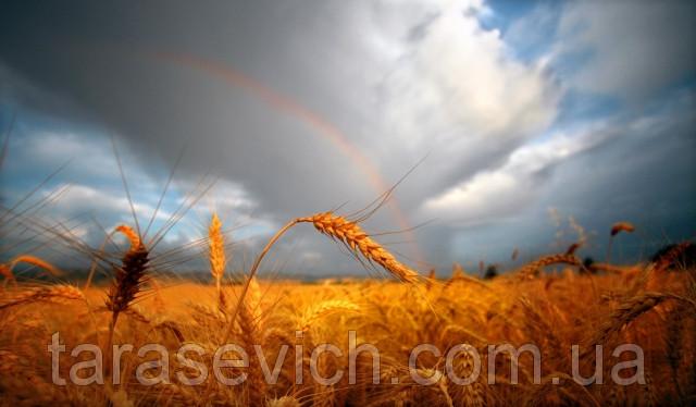 Аграрний потенціал України