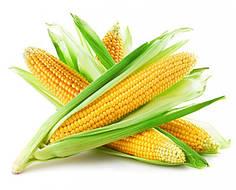 Семена гибрида кукурузы Монсанто ДКС 3705
