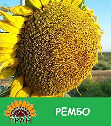 Семена подсолнечника Рембо (под Гранстар)