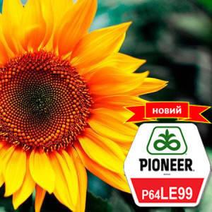 Семена подсолнечника П64ЛЕ99 (P64LE99) Pioneer, фото 2