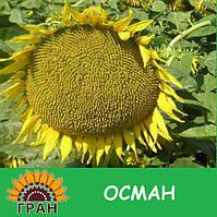 Семена подсолнечника Осман (под евролайтинг)
