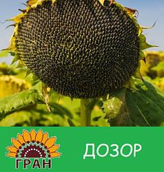 Семена подсолнечника Дозор (100 – 107 дней)