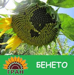 Семена подсолнечника Гран Бенето