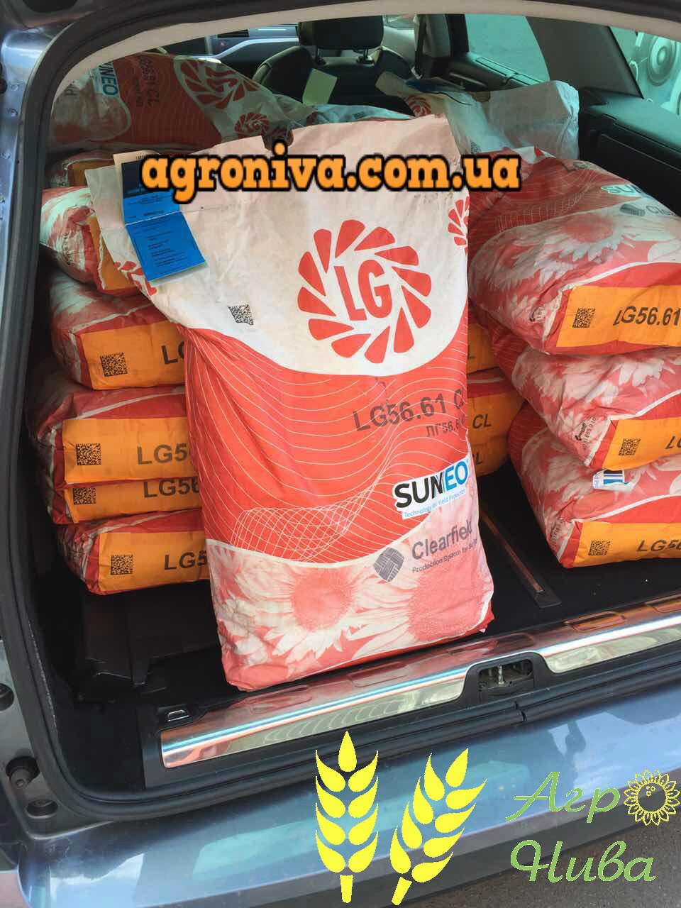 Семена подсолнечника ЛГ 5661CL Limagrain Италия