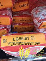 Семена подсолнечника ЛГ 5661CL Limagrain Италия, фото 3