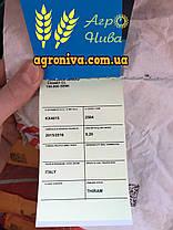 Семена подсолнечника ЛГ 5661CL Limagrain Италия, фото 2