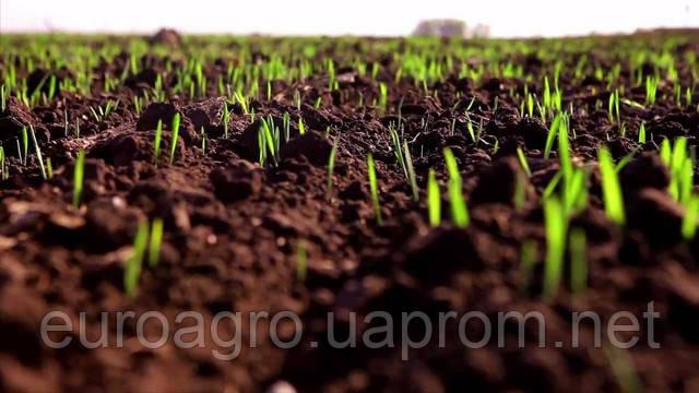 Вести с полей: сев кукурузы и подсолнечника вышел на финишную прямую.