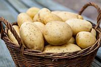 Почем нынче картофель?