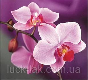 Алмазная вышивка орхидея 30х30 см, частичная выкладка