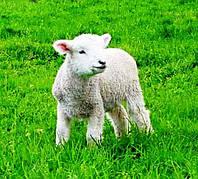 Теплая одежда из меха овцы