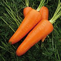 Мирафлорес F1 - семена моркови 100 000 семян, Clause