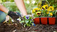 Посадка растений: деревьев, кустарников