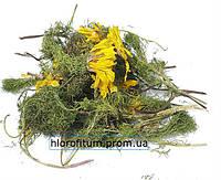 Адонис весенний, трава 100 грамм - (Adonis vernalis)
