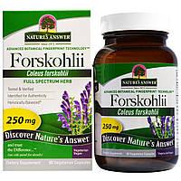 Nature's Answer, Forskohlii, 250 мг, 60 шт., вегетарианские капсулы