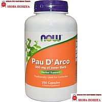 Now Foods США,  Кора муравьиного дерева, Pau D`Arco 500 мг, 250 капсул
