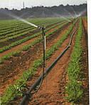 Капельный полив для картофельного участка-гарантия хорошего урожая!!!