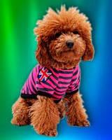 Футболка для собак и кошек «Великобритания» (футболка «London») розовая