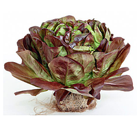 ГОГЕН - семена салата типа Саланова дражирование, 1000 семян, Rijk Zwaan, фото 1
