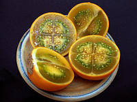 КАНТАКАРИ (solanum xanthocarpum) ОТ ВСЕХ БОЛЕЗНЕЙ, фото 1