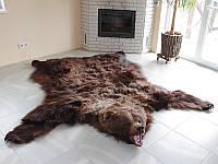 Шкура бурого медведя, ковер из медведя, медвежья шкура, ковер из шкуры бурого медведя