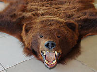 Шкура бурого магаданского огромного медведя, ковер из медведя, медвежья шкура дорогие, шикарные подарки