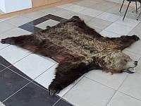 Шкура бурого медведя, ковры из шкур косолапого, интерьерные подарки