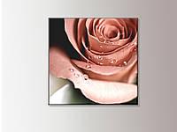 Бутон розы. Интерьерная картина на холсте
