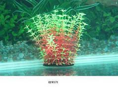 Растение для аквариума 14-17 см Lang №024171