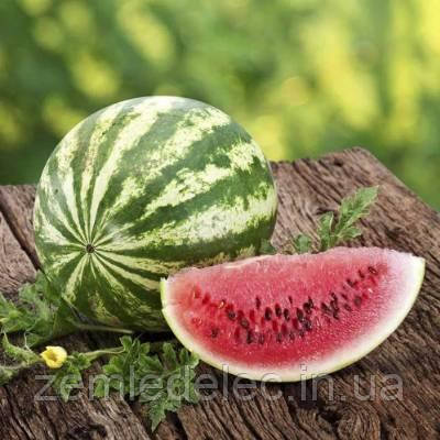Семена арбуза АУ Продюсер  0,5 кг. Агризаатен