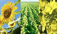 Продолжается рост глобального производства масличных.