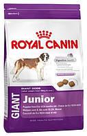 Royal Canin Giant Junior для щенков гигантских пород старше 8 месяцев