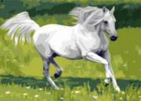 """Картина по номерам 40х50см, набор состоит из холста с контуром """"Лошадь белая"""", акриловых красок и  кисточек - 3шт."""