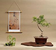 Семена Софора Японская